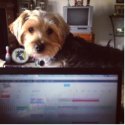 My dog distracting me from writing recommendation letters.